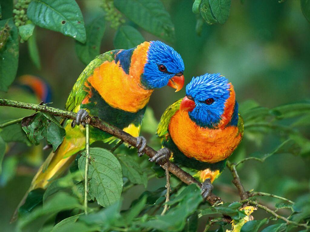 oiseauxbfd190.jpg
